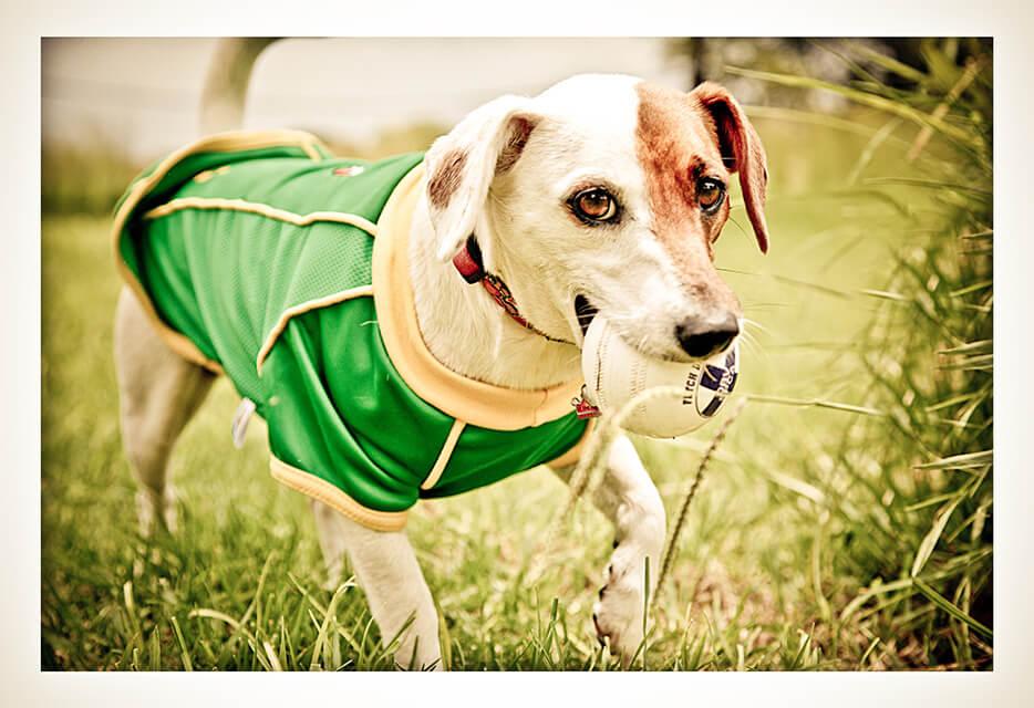 south africa dog